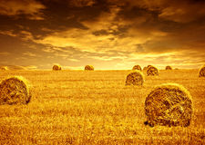 Tempo de colheita do trigo Fotografia de Stock Royalty Free