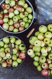 Tempo de colheita, maçãs Maçãs frescas orgânicas na cesta Appl fresco Fotos de Stock Royalty Free