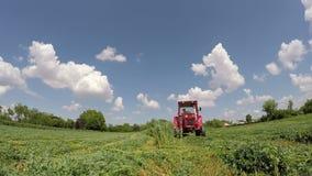 Tempo de colheita no filme do verão com som video estoque
