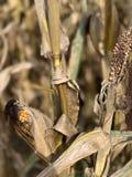 Tempo de colheita no outono imagem de stock