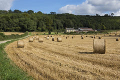 Tempo de colheita - North Yorkshire - Inglaterra Fotografia de Stock