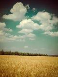 Tempo de colheita retro Fotos de Stock