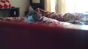 Tempo de filme com gato fotografia de stock