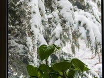 Tempo de inverno imagem de stock royalty free