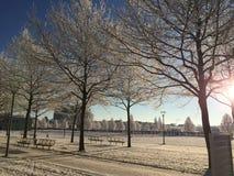 Tempo de inverno em Erfurt, Alemanha Imagens de Stock