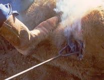 Tempo de marcagem com ferro quente em MuleshoeTexas Imagens de Stock
