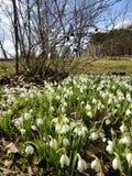 Tempo de mola das flores brancas Fotografia de Stock