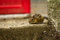 Tempo de mola do esquilo imagem de stock