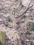 Tempo de mola na flor Imagens de Stock