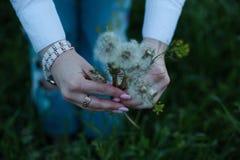 Tempo dei fiori fotografia stock