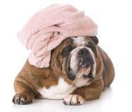 Tempo del bagno del cane fotografia stock libera da diritti