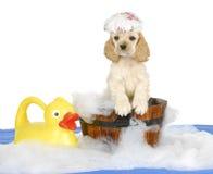 Tempo del bagno del cucciolo fotografia stock libera da diritti