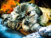 Tempo del cucciolo Fotografia Stock