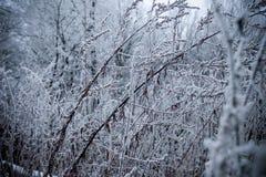 Tempo del gelo Fotografie Stock Libere da Diritti