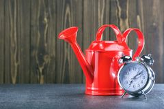 Tempo del giardino piantatura di concetto Annaffiatoio ed orologio rossi su fondo di legno immagine stock