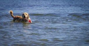 Tempo del gioco del cane nel lago Immagini Stock Libere da Diritti