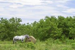 Tempo del pasto del cavallo Fotografia Stock Libera da Diritti