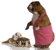 Tempo del pasto del cucciolo e della madre fotografie stock