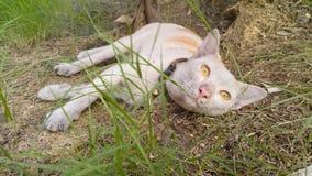 Tempo del pelo per un gatto Fotografia Stock Libera da Diritti