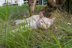 Tempo del pelo per un gatto Immagine Stock