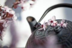Tempo del tè di zen per fengshui e il ayurveda Immagine Stock