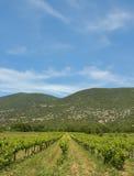 Tempo del vino Fotografia Stock
