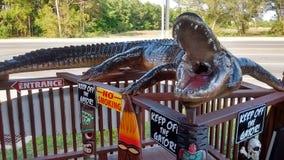 Tempo dell'alligatore di Florida Immagini Stock Libere da Diritti