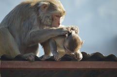 Tempo della famiglia della scimmia Immagini Stock