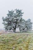 Tempo della neve Fotografia Stock
