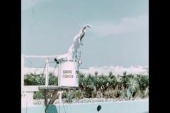 Tempo di alimentazione per i delfini a Marine Studios, Florida video d archivio