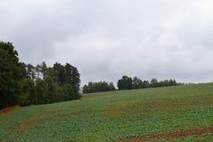 Tempo di autunno nel campo agricolo vicino alla foresta Fotografia Stock Libera da Diritti