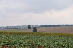 Tempo di autunno sui campi agricoli nuvoloso Immagine Stock Libera da Diritti