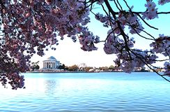 Tempo di CC Cherry Blossom di Washington Monument Fotografia Stock