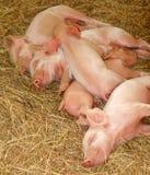 Tempo di dormire Immagine Stock Libera da Diritti