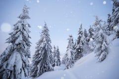 Tempo di inverno con le precipitazioni nevose nella foresta attillata immagine stock