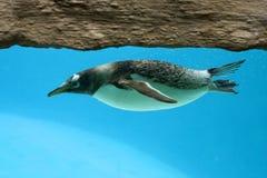 Tempo di nuotata Immagini Stock