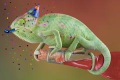 Tempo di Pary del Chameleon Fotografie Stock