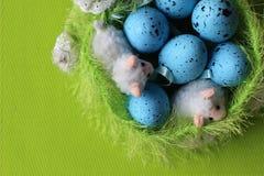 tempo di pasqua, tempo di pasqua della famiglia, uova di Pasqua, celebrazione di pasqua, grande tempo della famiglia insieme dura Fotografia Stock Libera da Diritti