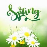 Tempo di primavera su fondo con i fiori della molla illustrazione di stock