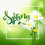 Tempo di primavera su fondo con i fiori della molla illustrazione vettoriale