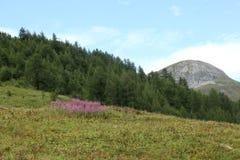 Tempo di primavera sulle alpi italiane Immagini Stock Libere da Diritti