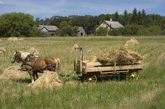 Tempo di raccolta dell'azienda agricola del vagone del fieno della squadra del cavallo Immagine Stock Libera da Diritti