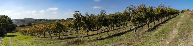 Tempo di raccolto dell'uva Immagine Stock