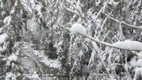 Tempo di stupore di inverno nella foresta stock footage