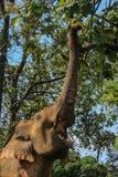Tempo do almoço dos elefantes fotografia de stock