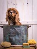Tempo do banho do filhote de cachorro fotografia de stock