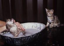 Tempo do banho dos gatos foto de stock