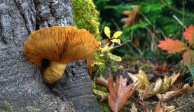 Tempo do cogumelo Fotografia de Stock Royalty Free