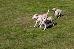 Tempo do divertimento do cão Imagem de Stock