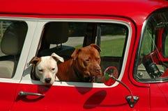Tempo do filhote de cachorro Imagem de Stock Royalty Free